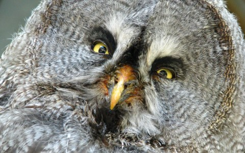 bart-owl-901136_1280