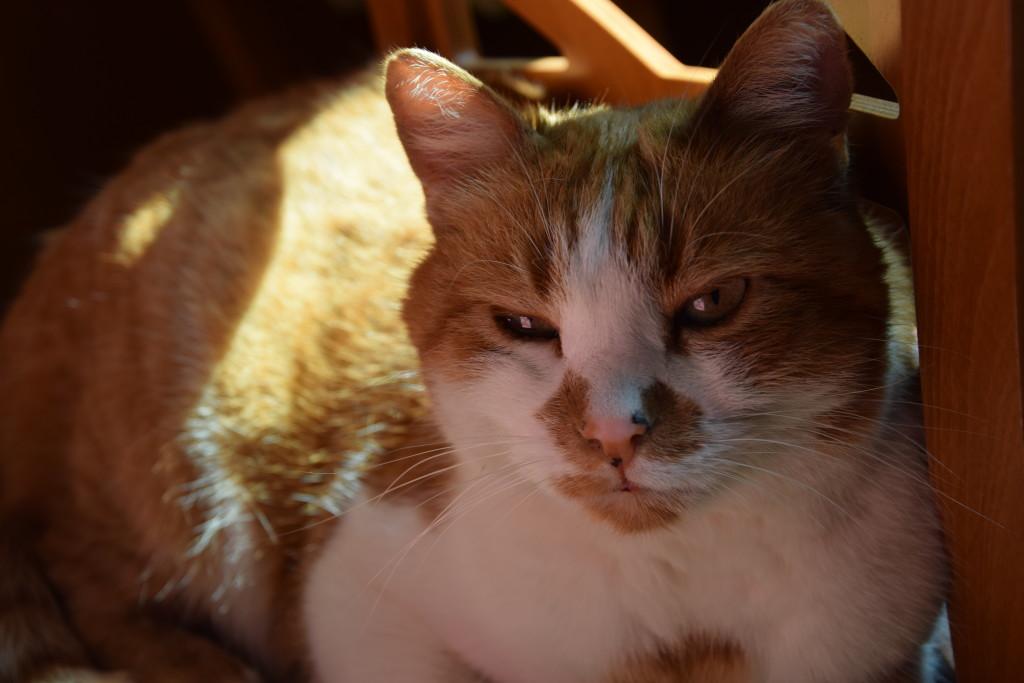 Dado - Il mio gatto